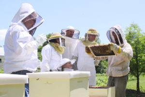 beekeepers young and old inspecting a hive